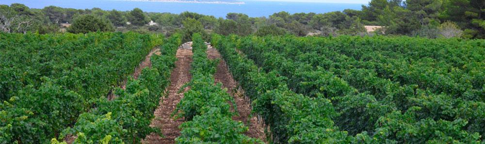 Vinos de Formentera